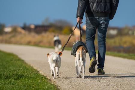 V24 l Hunde OP Versicherung