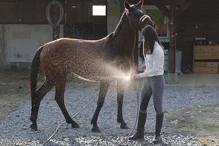 Vergleichen24 | Pferdehalterhaftpflicht